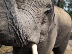 elefantes-en-Tailandia