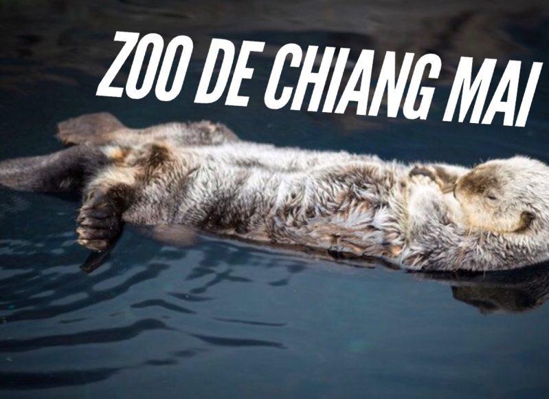 zoo de chiang mai